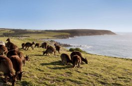 Onde Ficar na Ilha Kangaroo