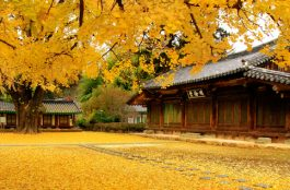 Onde Ficar em Jeonju na Coréia do Sul
